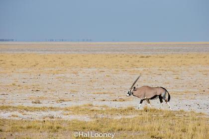 _F5U6353 Oryx Journey