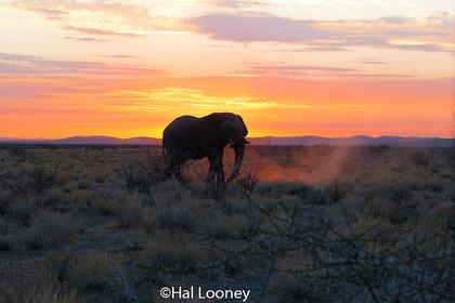 _F5U8244 Elephant at Sunset