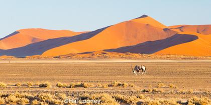 _F5U9137 Red Dunes, Oryx