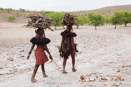 _LM45684 Himba Women with Firewood