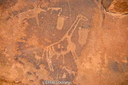 _LM45986 Petroglyph, Twyfelfontein