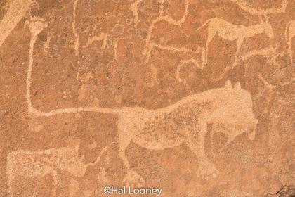 _LM46021 Lion Man Petroglyph