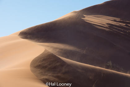_LM46317 Dune #1