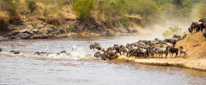 _59E0262 Crossing the Mara