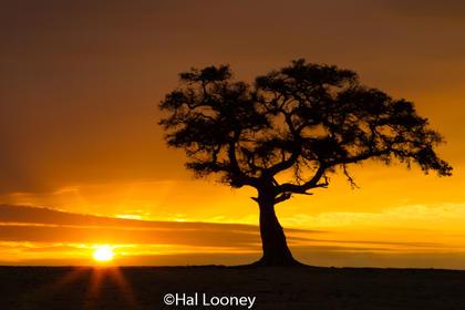 _59E0970 Sunrise