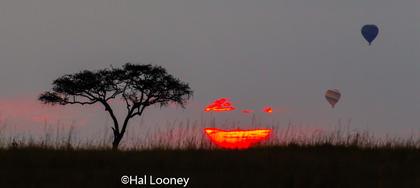 _59E2414 Balloons at Sunrise 2
