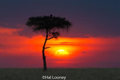 _F5U3014 Sunset in the Mara