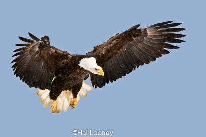 _005 Eagle Landing