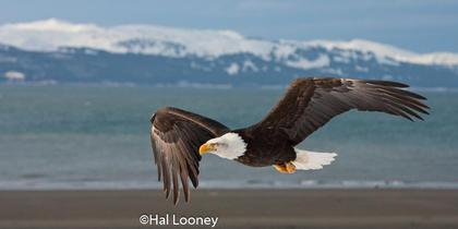 _036 Eagle Flight