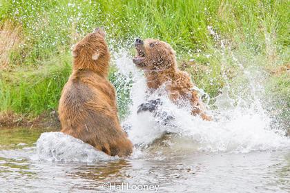 _040 Mom Defending Cubs