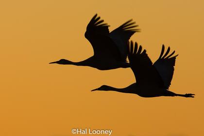 _049 Crane Silhoutte