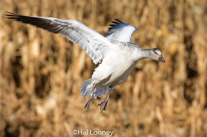 _019 Crane Landing