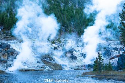 Geyser - Yellowstone