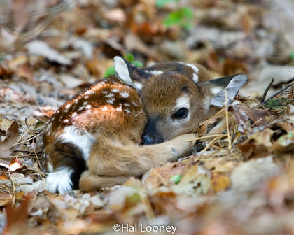 Fawn, North Carolina