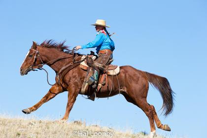 9504_Wrangler Montana