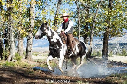 9861_Wrangler Montana