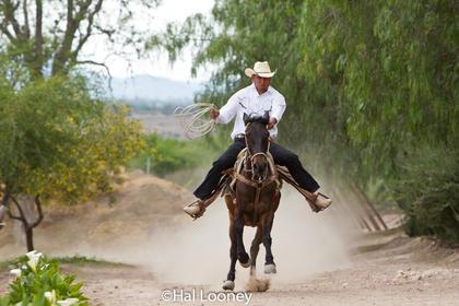 2926_Cowboy Las Trancas
